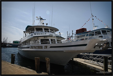 Whale Watching boat - The Privateer IV