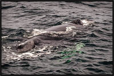 Whale Watching in Gloucester, MA
